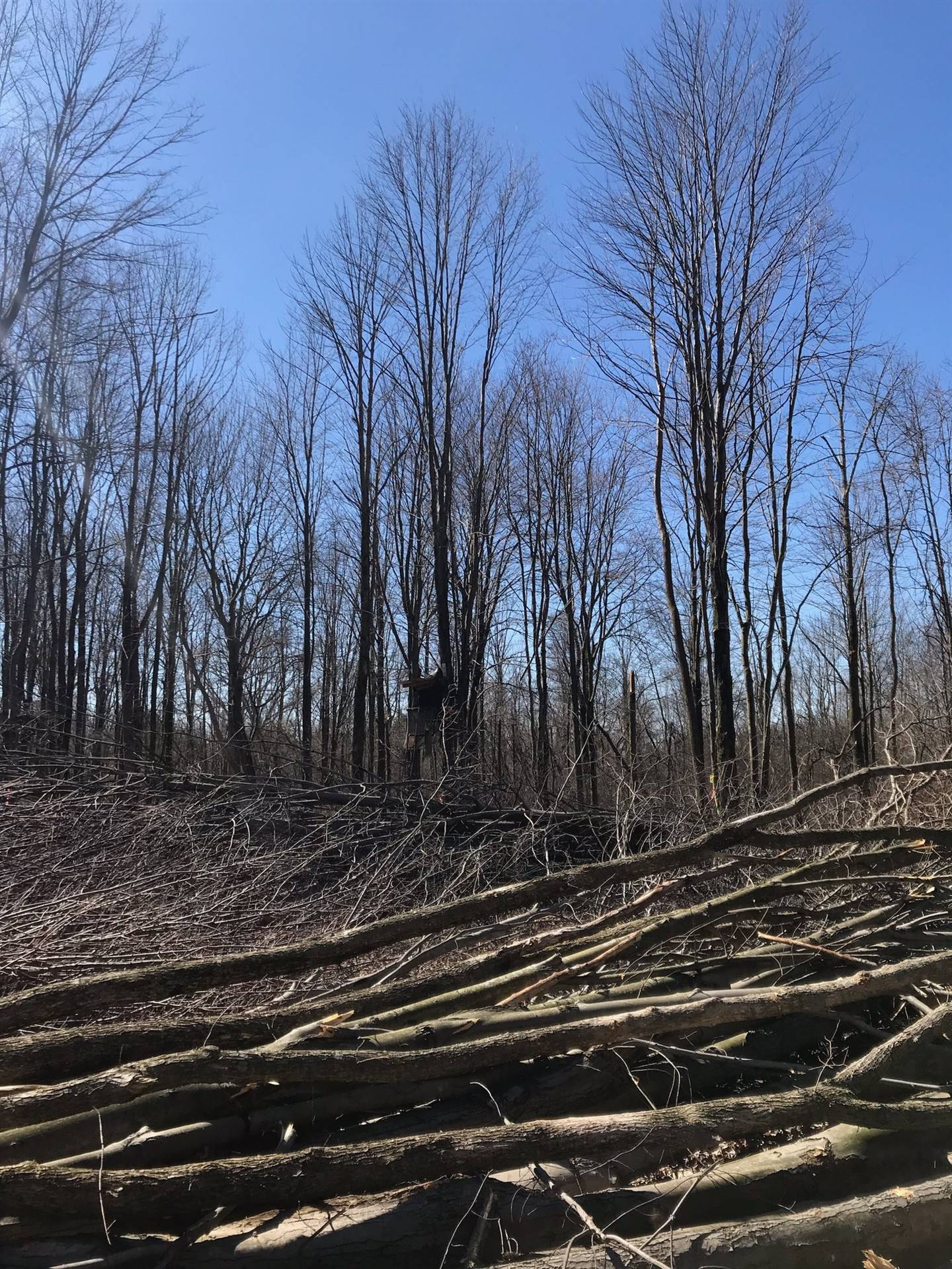 Clearing the trees on the site - March 26, 2019